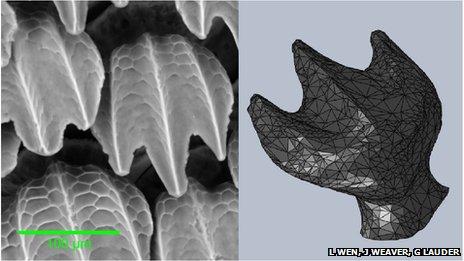 サメ肌の作り出す渦など、流体力学の研究に3D印刷模型を使用