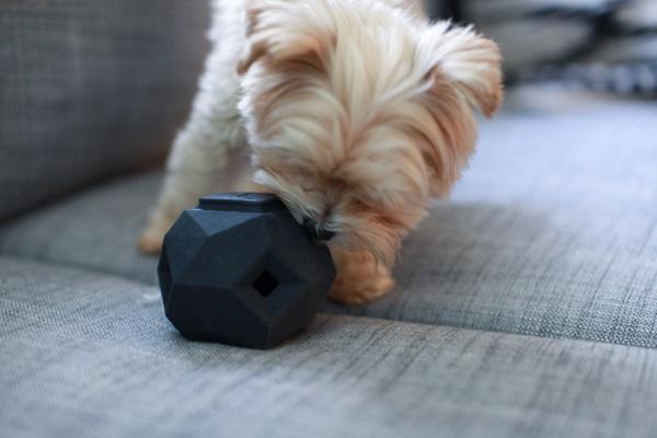 飼い犬ドギー用の3D印刷