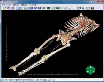 医療用CT画像から3Dデータ