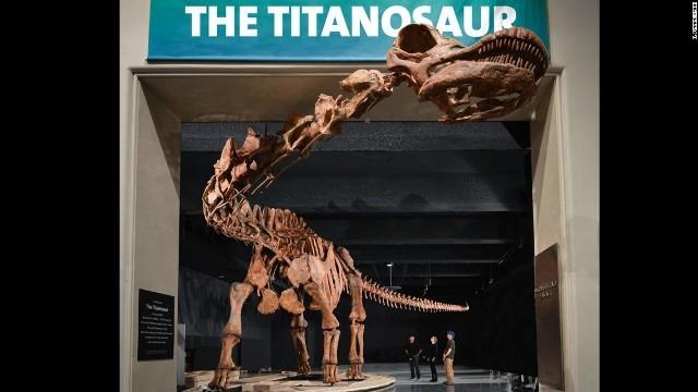 アメリカ自然史博物館に3Dプリンターで再現した巨大恐竜模型